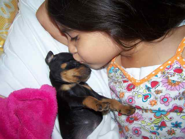 Miniature Pinscher: Anahi